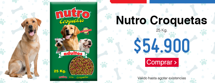 Productos para Perros - Homecenter.com.co