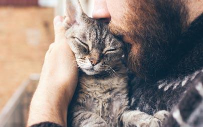 Aprende cómo consentir a tu gato