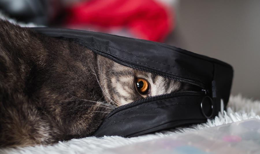 Cómo consentir a tu gato, ideas para consentir a tu gato