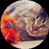 6 juguetes novedosos para tu gato
