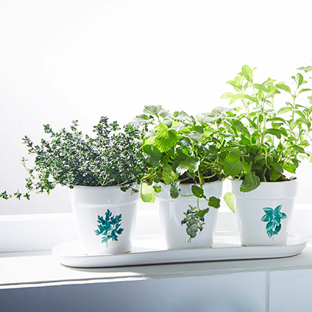 ideas para decorar patios - plantas