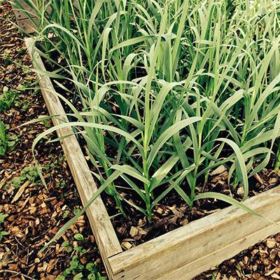 Contenidos relacionados - Plantar plantas aromaticas ...