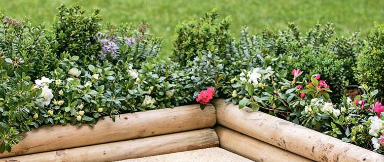 Flores y plantas para los jardines de tu hogar for Ver jardines